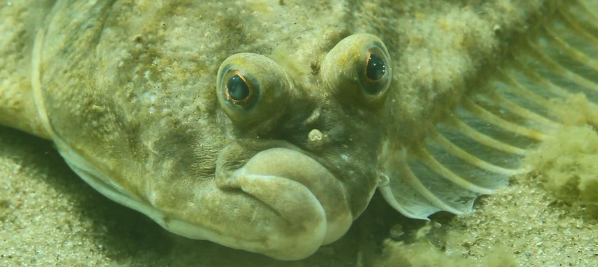 Stornia fot. Michał Procajło / Underwater Passion